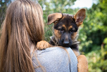 Fotomurales - Young woman holding her puppy on shoulder. Cute german shepherd dog, New best friend. Home pet and family guardian. Natural blurred background.